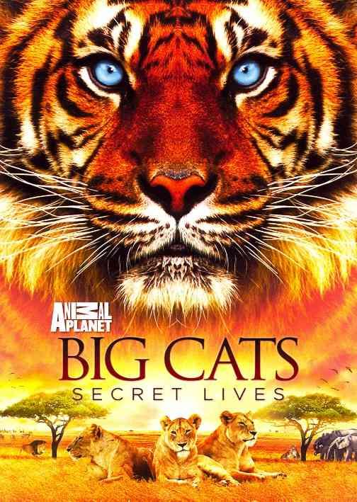 BIG CATS:SECRET LIVES (DVD)